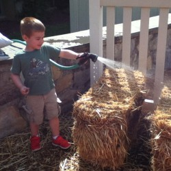 AFTER - Watering the Bale Garden