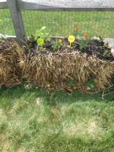 straw bale garden 3
